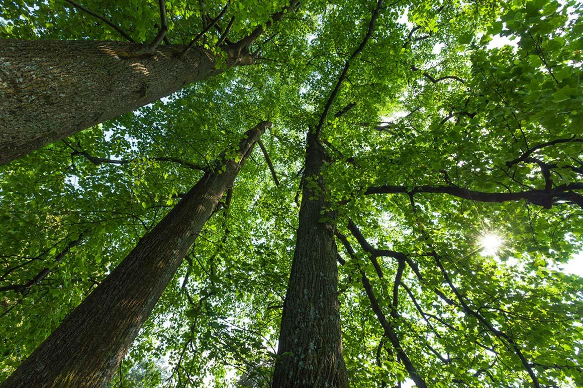 http://www.lesarbres.com/wp-content/uploads/2016/04/lesarbres-treecare-03-opt.jpg