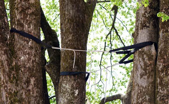 Les Arbres tree and shrub maintenance