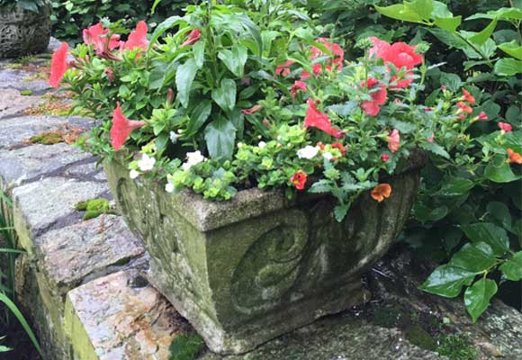 ornate concrete planter containing flowering plants