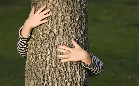Les Arbres organic tree care