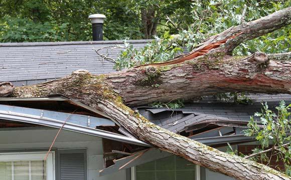Les Arbres arborists storm damage repair experts