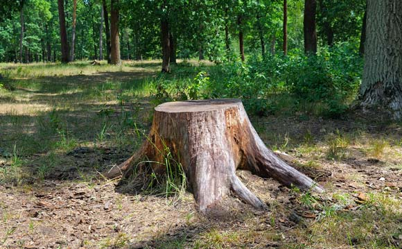 Les Arbres tree experts tree removal and stump grinding