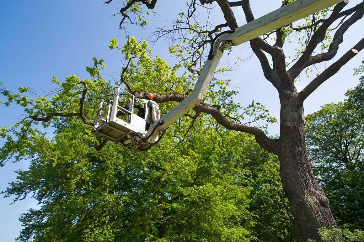 https://www.lesarbres.com/wp-content/uploads/2019/01/lesarbres-pruning1.jpg
